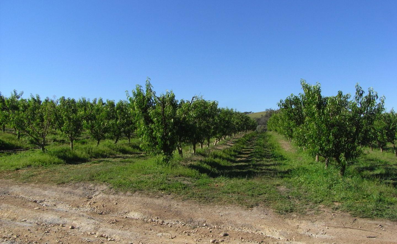 Australia Orchard