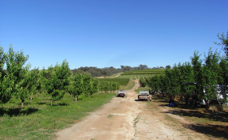 Plantage Australien