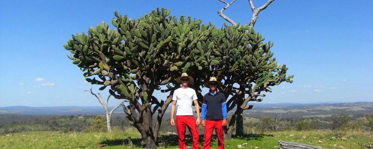 Fruit Picking Australien
