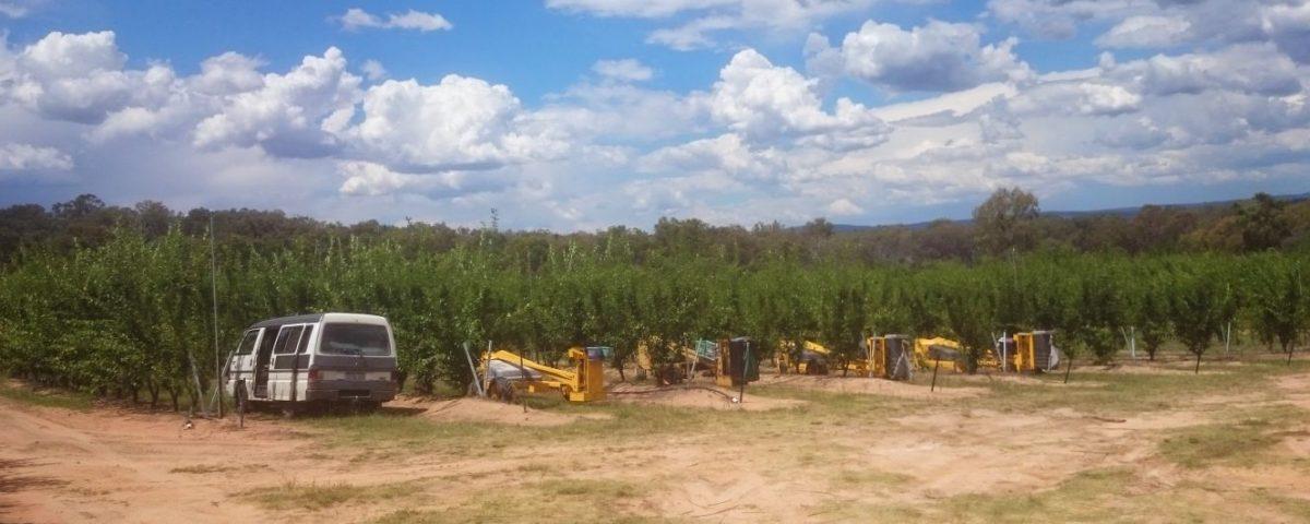 Australia Fruit Picking