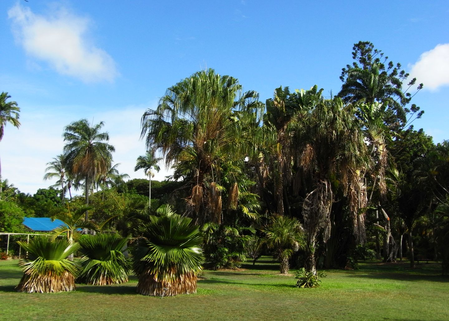Townsville Parks