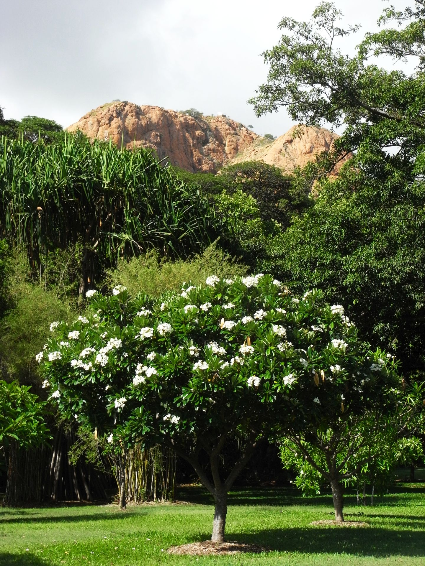 Townsville Queens Gardens